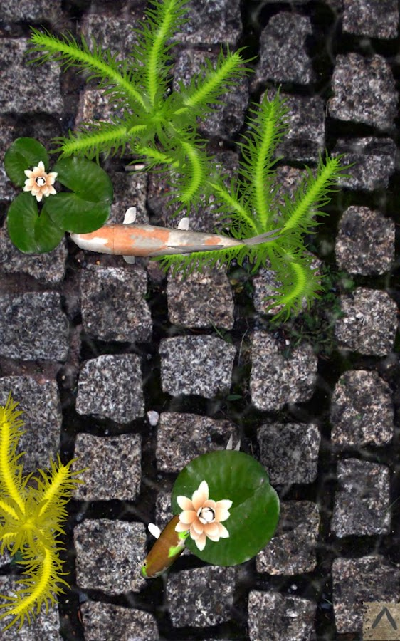 Pocket Pond 2 - screenshot