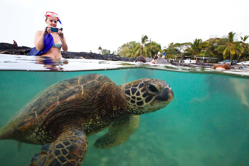 honu-snorkelers - A woman takes a photo of a honu, or sea turtle, in Kealakekua, Hawaii.