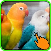 Sweet Parrot Live Wallpaper