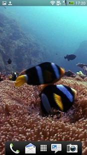 Ocean Fish Video Homescreen