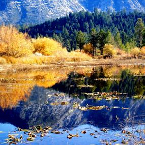 Lake Tahoe 3 by Tatiana Syunyaeva - Landscapes Waterscapes ( water, reflection, california, lake, forest, travel, landscape, lake_tahoe, mountains, nature, autumn, tahoe, fall, trees )