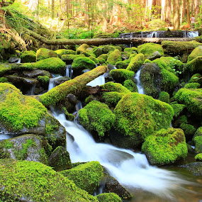 Woodland Stream by Jeff McVoy - Landscapes Waterscapes ( water, stream, forrest, green, woodland, flow, woods, renewal, trees, forests, nature, natural, scenic, relaxing, meditation, the mood factory, mood, emotions, jade, revive, inspirational, earthly,  )