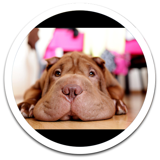 Dog Live Wallpaper 個人化 App LOGO-APP試玩