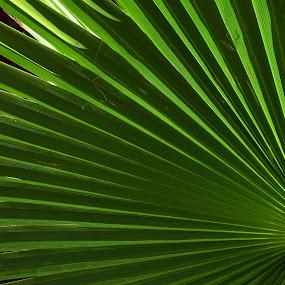 shadows and lines by Mirela Korolija - Nature Up Close Leaves & Grasses