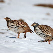 Birds of Qinghai, China