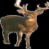 Deer Hunting! Kids Game!