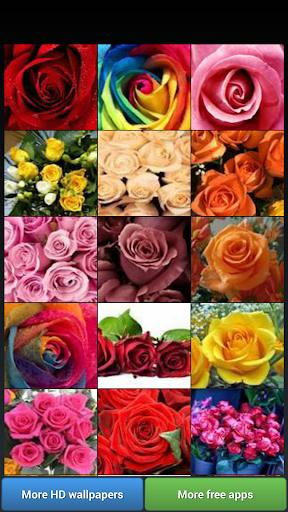 Beautiful Roses HD Wallpapers