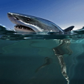 White Shark Live Wallpaper icon