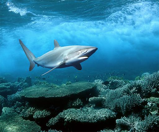 サメのライブ壁紙