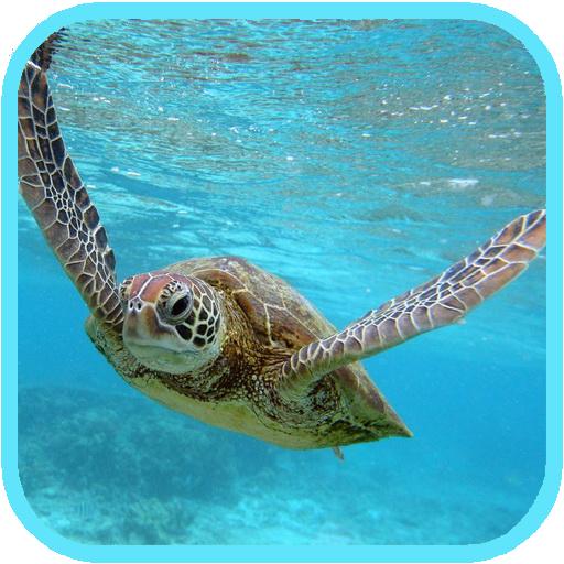 Sea Turtle HD. Wallpaper LOGO-APP點子