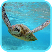 Sea Turtle HD. Wallpaper
