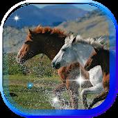 Horses Photo Gallery LWP