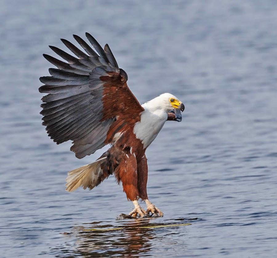 the Catch by Jan Fourie - Animals Birds