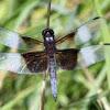 Dragonfly (5)