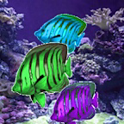 live wallpaper acquarium icon