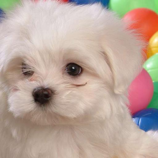 White Baby Dog Puzzle
