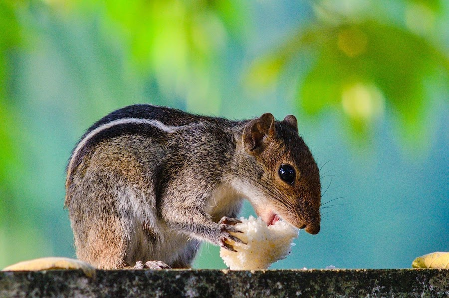 Squirrel by Sunny Joseph - Animals Other Mammals