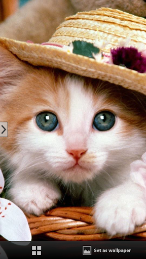 Cute Cats Wallpapers1-mobile