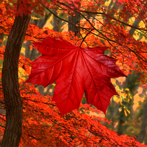 Galaxy S4 Leaf Live Wallpaper for PC and MAC