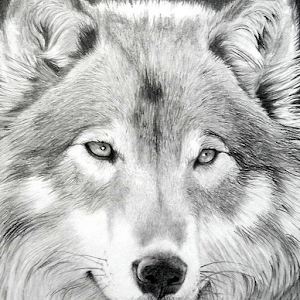 Wolf Puzzle for PC and MAC