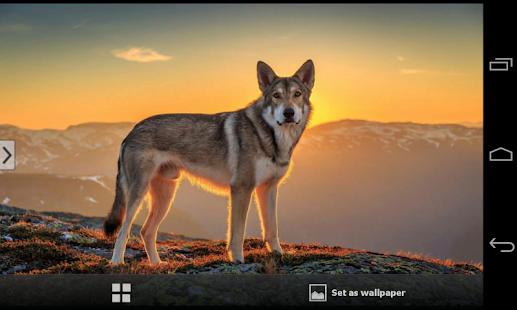 Cute Animals Wallpapers HD Screenshot Thumbnail