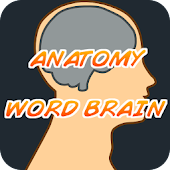 Anatomy Word Brain