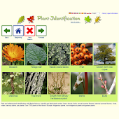 Plant Identification - worldwide
