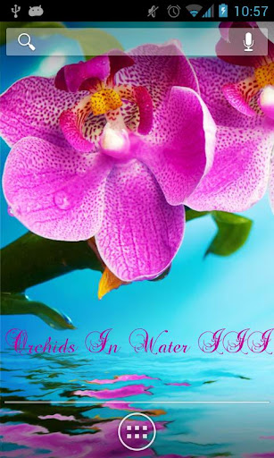 Orchids In Water III