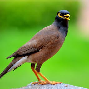 First Look by Shrey Chohan - Animals Birds ( click, animallove, birds, animal )