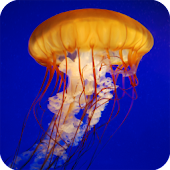 Jellyfish Live Wallpaper