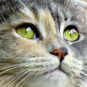 Ms. Squeaky by Trish Hamme - Animals - Cats Portraits (  )
