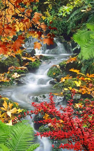 森林,瀑布,湖泊