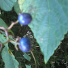 blue and purple berries
