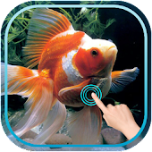 Magic Touch : Gold Fish