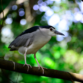 Bird Close-up by Nur Ismail Mohammed - Animals Birds ( aviary, bird, drinking, pond, bird park )