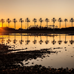 Dueling Palms in a Puddle by Shelley Patterson - Landscapes Sunsets & Sunrises ( gulf shores, sunset, palm trees, the wharf, orange beach )