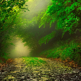Dreamy autumn by Geanina Boureanu - Landscapes Forests
