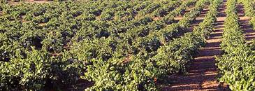Visit Viñexa Winery