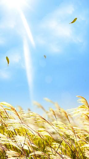 Natural Reed Live Wallpaper