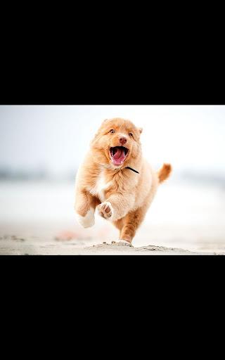 Photo HD Running Dog LWP