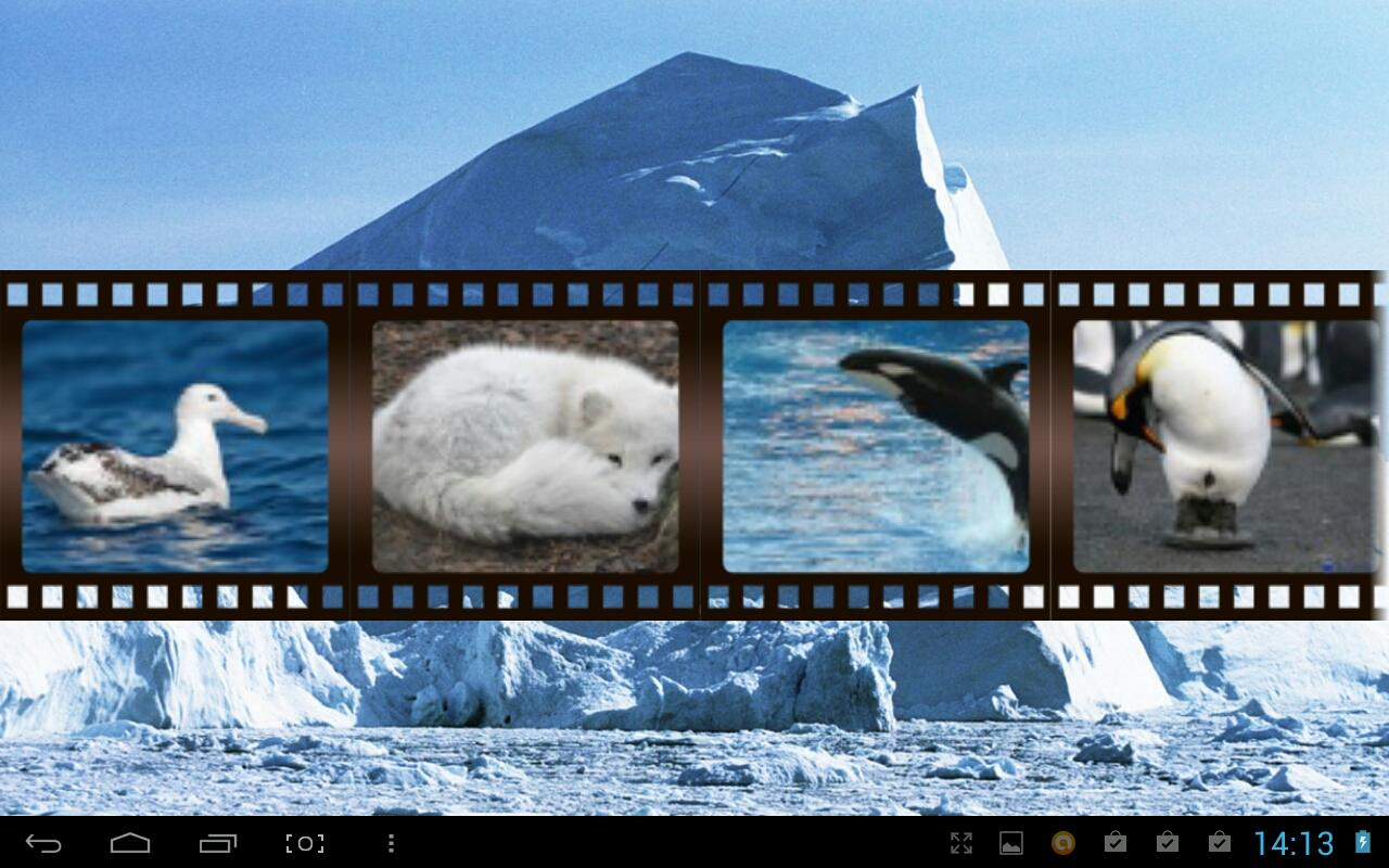 Best Arctic Animals Sounds - screenshot