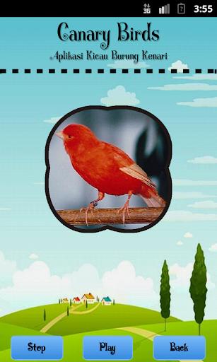 玩音樂App|Canary Birds免費|APP試玩