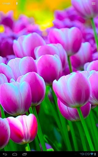 無料个人化AppのSpringtime Tulips Carpet Bloom|記事Game