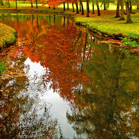Fall Reflection by Todd Klingler - Instagram & Mobile iPhone ( water, orange, reflection, red, tree, autumn, fall, yellow, pond, color, colorful, nature,  )