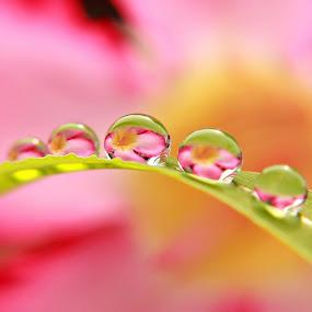 ©ributbagus by Ribut Bagus - Nature Up Close Natural Waterdrops