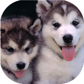 Puppies dogs live wallpaper
