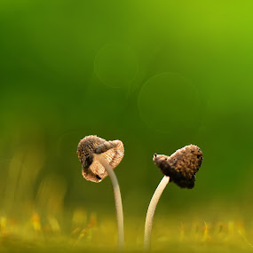 together by Girdan Nasution - Nature Up Close Mushrooms & Fungi ( #macro #indonesia #nikon #magazine #instagram #indonesia #mushrooms #green )