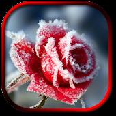 Winter Flower Live Wallpaper