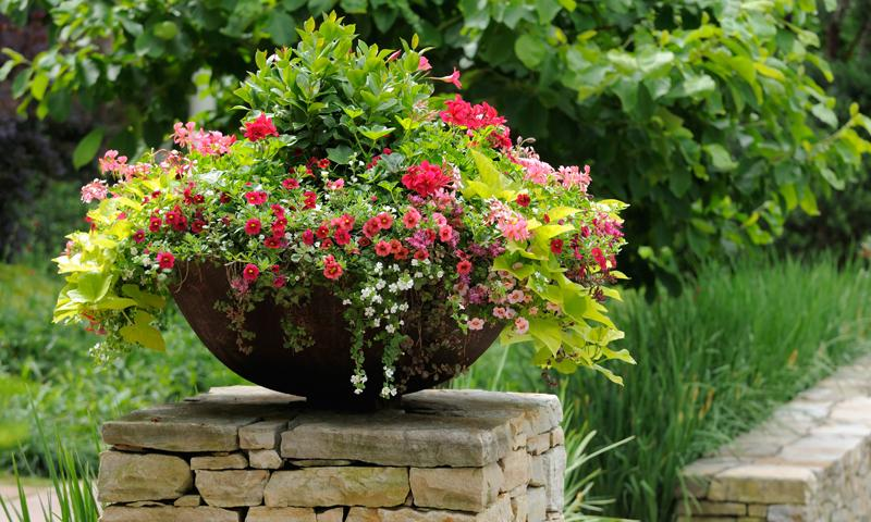Flowers For A Raised Flower Bed