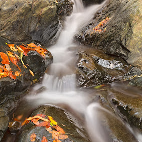 Glen Artney Stream by Nicolas Raymond - Landscapes Waterscapes ( water, patapsco, united, stream, hdr, america, park, waterscape, rocky, state, stone, states, rock, valley, leaves, landscape, usa, artney, glen, nature, autumn, fall, maryland, long exposure, , colorful, mood factory, vibrant, happiness, January, moods, emotions, inspiration )